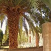 Ostia Antica - Palm view