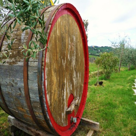 Sagrantino Wine - Barrel