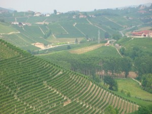 Alba - Vineyards