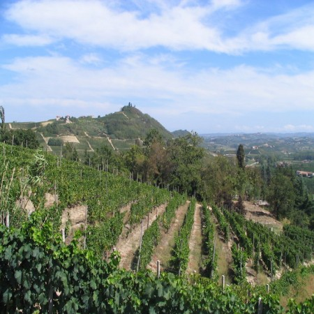 Asti - Vineyards