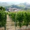 Barolo - Nebbiolo Vineyards